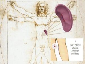 Bazo Da Vinci Chakra Netzach